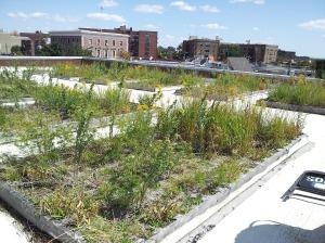 Sorrentino Recreation Center green roof in Far Rockaway, Brooklyn.
