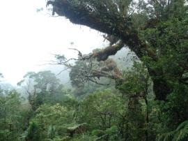 Kolombangara Island Biodiversity Conservation Association reserve