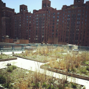 Chelsea Recreation Center green roof - 25th st & 10th ave Manhattan.