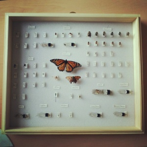 A set of Law's pinned specimens.